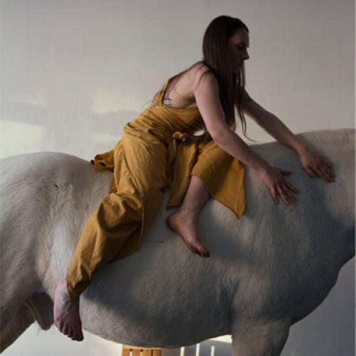 Performance with horse