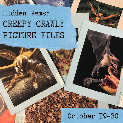"Pile of picture file images with the text ""Hidden Gems: Creepy Crawly Picture Files"" and ""October 19-30"" overlaid on blue ripped paper."
