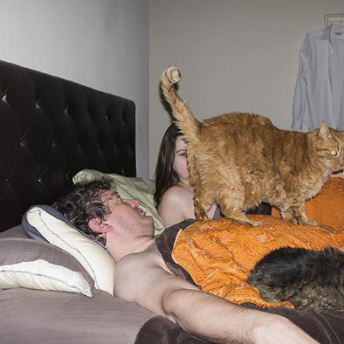photo image cat and bed