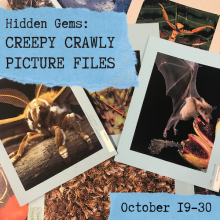"""Pile of picture file images with the text """"Hidden Gems: Creepy Crawly Picture Files"""" and """"October 19-30"""" overlaid on blue ripped paper."""