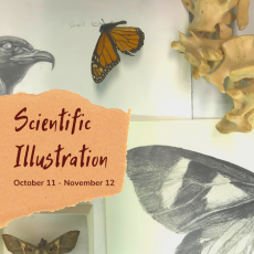 """Detail of items in the Scientific Illustration exhibition with a torn piece of paper on top and text reading """"Scientific Illustration / October 11 - November 12"""""""